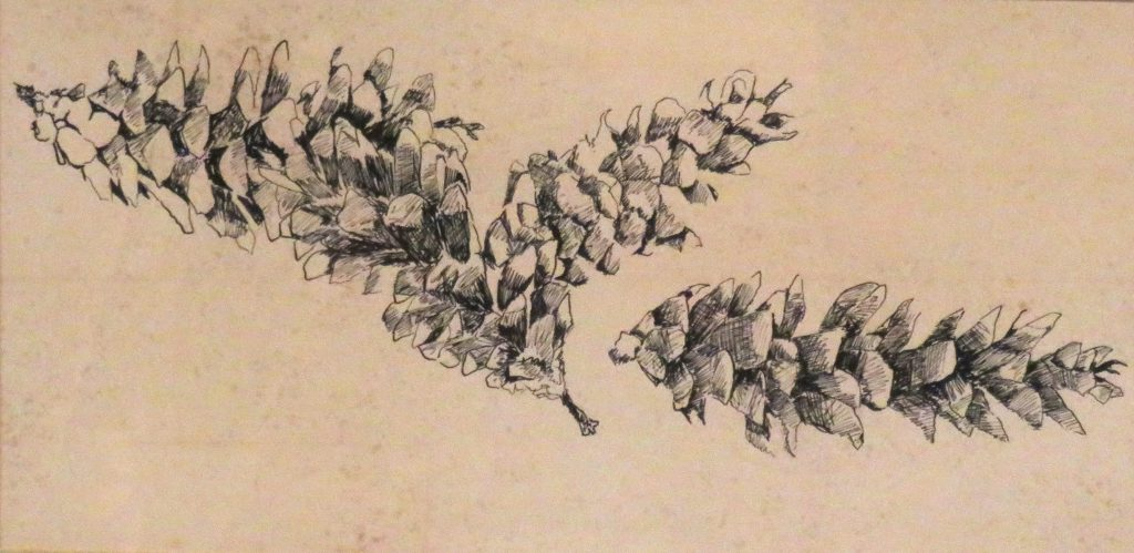 Yost Charles White Pine Cones India Ink
